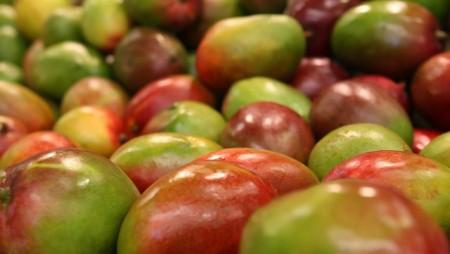 Desarrollan bioplástico a partir del mango
